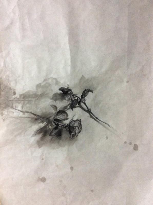 Rosa negra, grafito y tinta china sobre papel Kozu