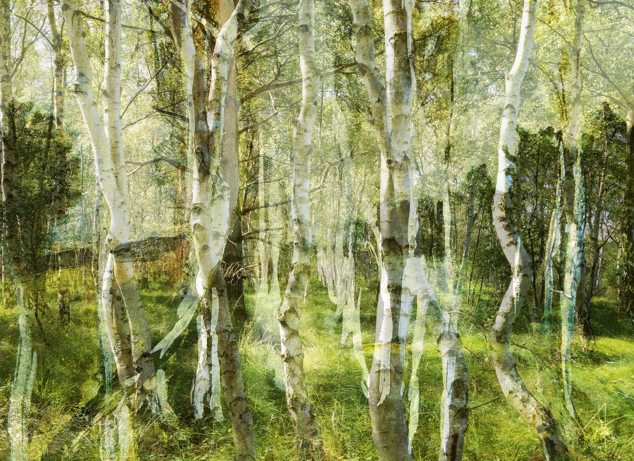 Birkenhain, 2014, C-print, 160 x 220 cm.